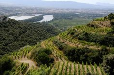 Cote Rotie vineyard in the Rhone wine area, South of france