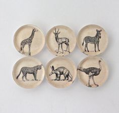 Africa Wildlife Magnet Set  Glass Fridge Magnet Set by twoelements, $9.00