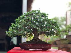 Bonsai Art, Tropical Flowers, Garden, Plants, Cacti, Amazing, Beautiful, Cactus Plants, Garten