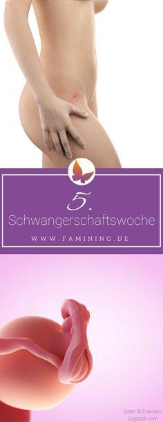 5. SSW (Schwangerschaftswoche)