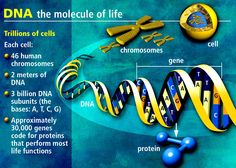 DNA basics for biotech rookies.
