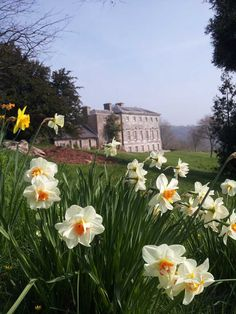 View with narcissi of Sharpham House on the Sharpham Estate, Spring 2015.  Pin us at www.pinterest.com/sharphamtrust Like Sharpham Trust at www.facebook.com/SharphamTrust Follow us @SharphamTrust Visit us at www.sharphamtrust.org