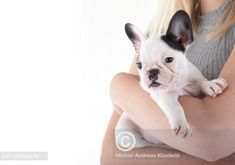 French Bulldog, Dog Lovers, Dogs, Cute, Animals, Animales, Bulldog Frances, Animaux, Doggies
