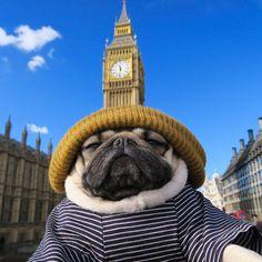 Big Ben, Little Pug