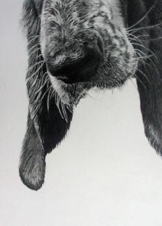 nose!
