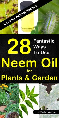 28 ways to use neem oil for plants - including tips and recipes for natural pest control sprays using neem oil on mildew spider mites aphids whiteflies and others. Care Skin Condition and Treatment Oil Makeup Slugs In Garden, Garden Pests, Organic Gardening, Gardening Tips, Vegetable Gardening, Veggie Gardens, Organic Farming, Flower Gardening, Indoor Gardening