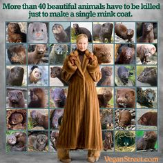 More than 40 beautiful animals have to be killed just to make a single mink coat. We ALL know this - Remember that next time you wear your ugly fur coat.