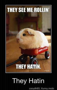 Guinea Pig Quotes, Quotations & Sayings 2018