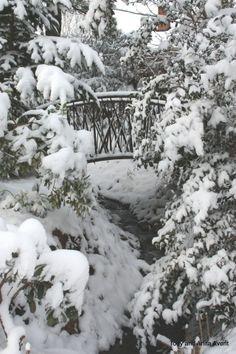Cattail bridge in snow