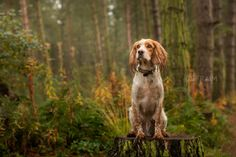 Dog photography East Yorkshire Fraim Photography
