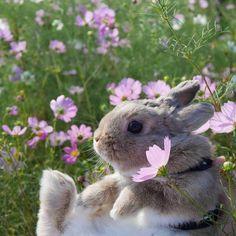 Bunny in a flower meadow. Mini Lop Bunnies, Cute Baby Bunnies, Cute Babies, Cute Funny Animals, Cute Baby Animals, Animals And Pets, Funny Cats, Hamsters, Cute Creatures