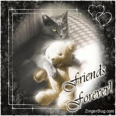 Click to get the codes for this image. This beautiful glitter graphic shows a cat hugging a teddy bear lying in a sunbeam. The comment reads: Friends Forever!