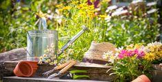 Při zahradničení se vám mohou hodit užitečné rady.
