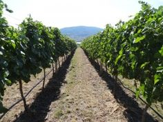 Looking Down the Vines - Check out our September 2014 Kelowna Real Estate News Report.