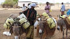 la leche de camella es un alimento básico