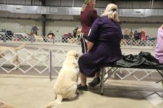 John Tuohy's  MY WRITERS SITE: We went to a dog show on Sunday,