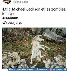 Funny memes lol jokes faces 47 ideas for 2019 Wtf Funny, Funny Jokes, Animal Memes, Funny Animals, Spideypool, Funny French, Great Memes, Good Humor, Funny Tweets