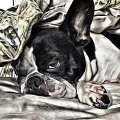 Dexter, the French Bulldog, custom portrait, @dexterfrench Instagram photos | Websta