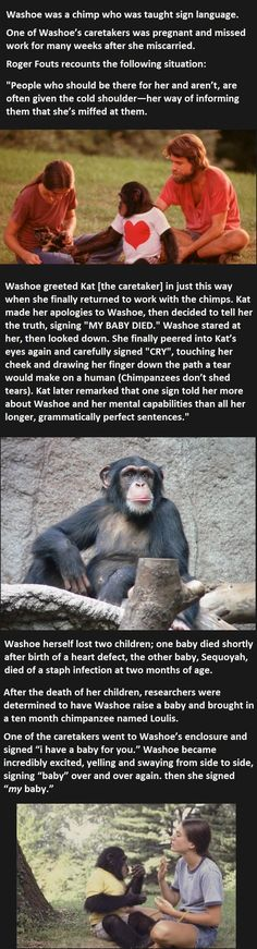 Chimp Learns About This Woman's Miscarriage. Her Response Is Incredible.