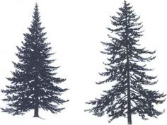 ... Pine Trees Silhouette , Pine Forest Silhouette , Pine Trees Silhouette