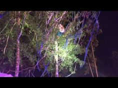 Middlelands Tree-Climbing Fiasco: GRiZ Forced to Stop Set for Rescue Mission - EDM In Stereo |