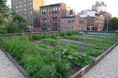 Rosemary's rooftop garden