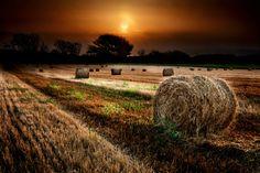 Campo de trigo al anochecer (by Alexander Velchev)