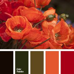 alizarin red color, color combination for interior decor, color combinations, color for decor, color matching, color of blood, color of greens, color of poppy stems, color of red poppies, color of wine, color palettes, color ppalettes for decor, color solution.