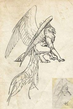 Wings Brown Things brown color l Fantasy Drawings, Animal Art, Animal Drawings, Mythical Creatures Drawings, Art Drawings, Animal Sketches, Creature Art, Griffin Tattoo, Art Story