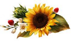 obrazek Sunflower Drawing, Watercolor Sunflower, Sunflower Art, Watercolor Flowers, Yellow Sunflower, Beautiful Flowers Wallpapers, Painted Gourds, Iphone Hacks, Bee Art