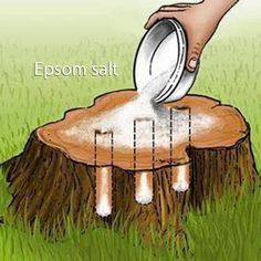 tree stump removal using rock and/or epsom salt: rock salt dries out the wood, epsom salt kills the tree by pulling moisture from the wood; epsom salt will also improve the soil by adding sulfur and magnesium, making it easy for you to replant. Garden Yard Ideas, Lawn And Garden, Garden Projects, Mailbox Garden, Stump Removal, Wood Stumps, Plantas Bonsai, Front Yard Landscaping, Landscaping Tips