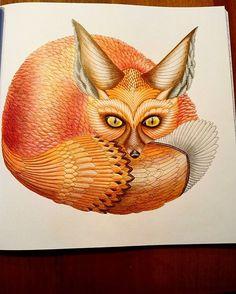 204 Best Millie Marotta Curious Creatures Images On Pinterest