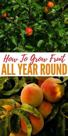 How To Grow Fruit All Year Round - The guide, and awesome infographic, below sho. How To Grow Frui Indoor Vegetable Gardening, Container Gardening, Organic Gardening, Gardening Tips, Hydroponic Farming, Hydroponic Growing, Permaculture, Aquaponics, Fruit Plants