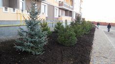 Озеленение территории |kacheli.com.ua