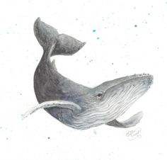 Humpback Whale Art Print by Vulpecula - X-Small Watercolor Ocean, Watercolour, Humpback Whale Tattoo, Whale Drawing, Whale Illustration, Whale Tattoos, Whale Art, Sculpture Projects, Nature Drawing