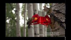 Humming Bird Edition in Vega Colorado 2015  by Jeremy Benisek www.dontpa...