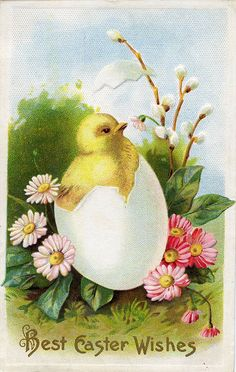 Charmingly cute chick adorned vintage Easter postcard.