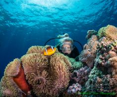 Gabriel de Leon Photography Sales specializes in Limited Edition Fine Art Photography. Photography For Sale, Fine Art Photography, Gabriel, Red Sea, Underwater World, Unique Image, Scuba Diving, Egyptian, Adventure