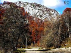 Peisaj de toamnă Mountains, Travel, Viajes, Destinations, Traveling, Trips, Bergen