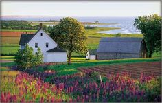 I want to visit Prince Edward Island. Then I can pretend to be Anne of Green Gables. I want to visit Prince Edward Island. Then I can pretend to be Anne of Green Gables. I want to visit Prince Edward Island. Then I can pretend to be Anne of Green Gables. Anne Green, Anne Of Green Gables, Places To Travel, Places To See, Pei Canada, Destinations, Prince Edward Island, Indian Summer, The Ranch