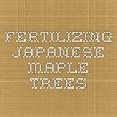 Fertilizing Japanese Maple Trees