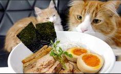 Cats Help You Learn How To Make Homemade Ramen