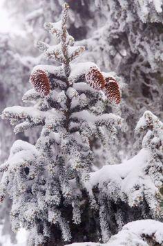 Similar scene in Spruce Pine...
