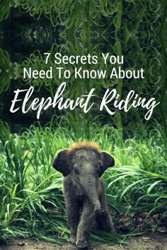 7 Secrets You Need To Know About Elephant Riding