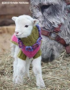 a lamb in a hand kni