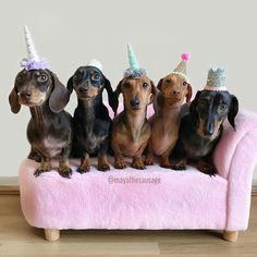 Let's Get This Party Started! Baby Dachshund, Dachshund Gifts, Daschund, Cute Puppies, Cute Dogs, Weenie Dogs, Doggies, Dog Heaven, Dog Mom
