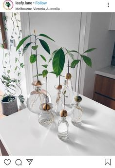 Pflanzen Avocado plants The Quick And Easy Guide To Kitchen Cabinets kitchen cabinets, kitchen cabin Avocado Dessert, Mug Design, Bathroom Plants, Hydroponic Gardening, Water Garden, Garden Plants, My New Room, Plant Decor, Amazing Gardens