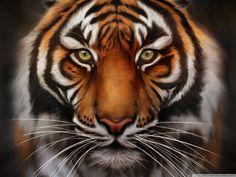 The Tiger Face HD Wallpapersaddsa