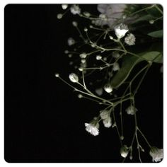 Nighttime light on gypsophila