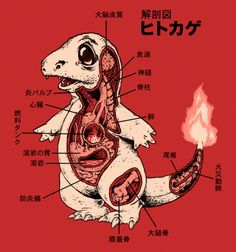 Charmander Anatomy from BustedTees